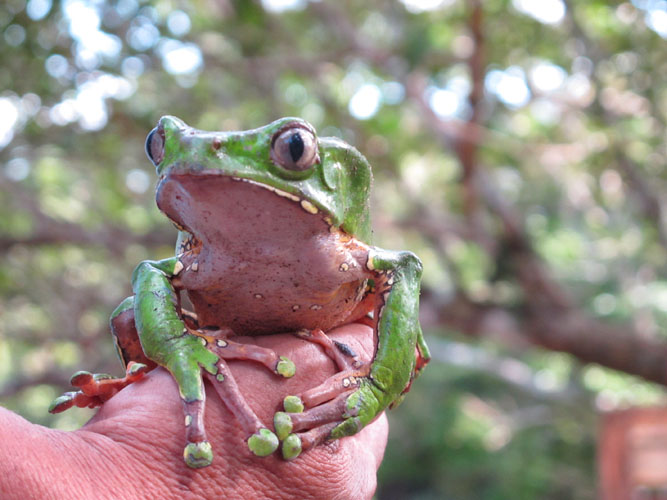 sapoinmysoul-the-frog-and-collecting-the-medicine-001_photo_morganmaher