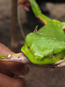 sapoinmysoul-the-frog-and-collecting-the-medicine-013_photo_morganmaher